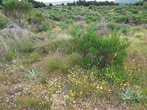 Yellow-banded Skipper habitat in the Sierra de Gredos © John Muddeman
