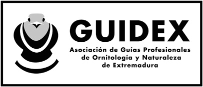 Guidex logo